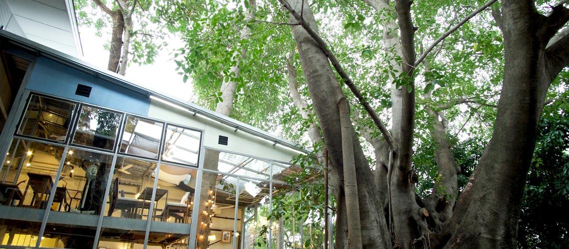 Sundays : ร้านอาหารในเรือนกระจกใสที่ร่มรื่นด้วยต้นไม้