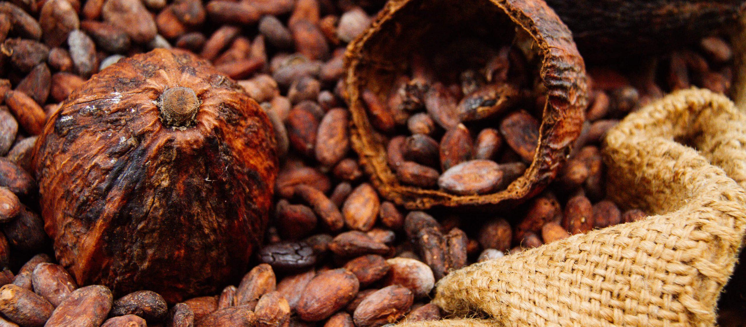 Cocoa Valley Cafe : โกโก้ร้อนท่ามกลางหมอกฝนเมืองน่านนคร