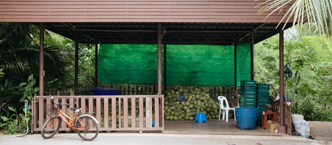 Y.Farmily : แบรนด์น้ำมะพร้าวที่ยกหน้าที่ปรุงความอร่อยให้เป็นของธรรมชาติ
