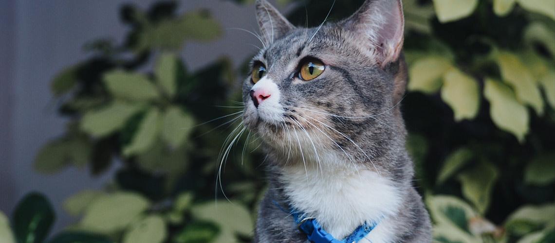 อ้วน : แมวคุณพ่อมือใหม่ไลฟ์สไตล์ 'ง่วง เหงา หาว งอน'
