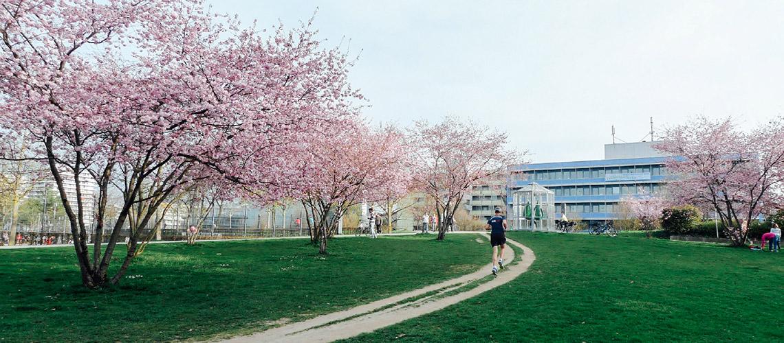 วิ่งในสวน Petuelpark ช่วงฤดูใบไม้ผลิ