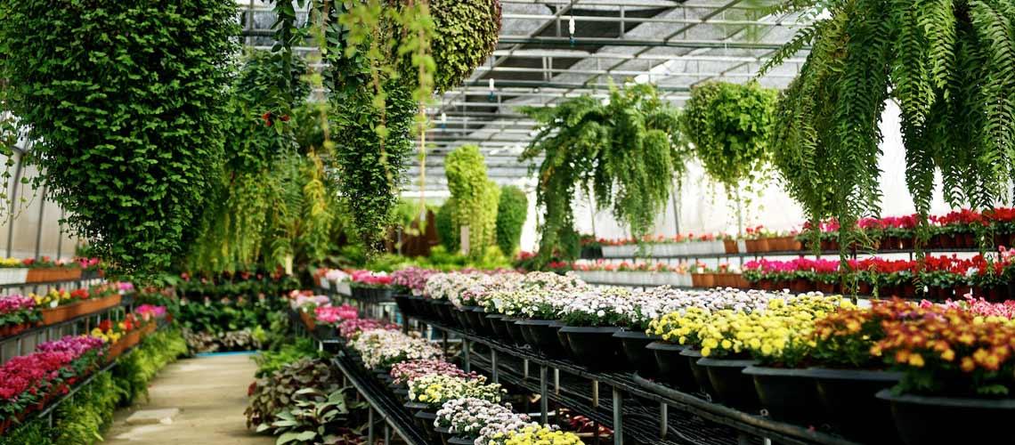 Faprathan Flora Park : วงกตสวนดอกไม้แห่งวังน้ำเขียว