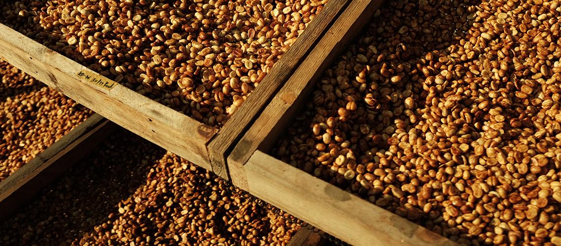 'กาแฟคือชีวิต' เรื่องราวของเกษตรกร คนเบื้องหลังกาแฟไทยคุณภาพดี