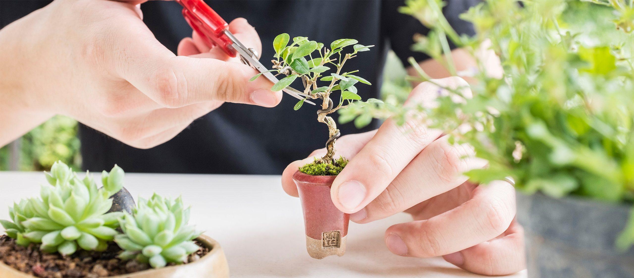 miNATURE_c ต้นไม้สายย่อ : ต้นไม้จิ๋วของนักทดลองสายเขียวที่ท้าทายว่าใครๆ ก็ปลูกต้นไม้ได้
