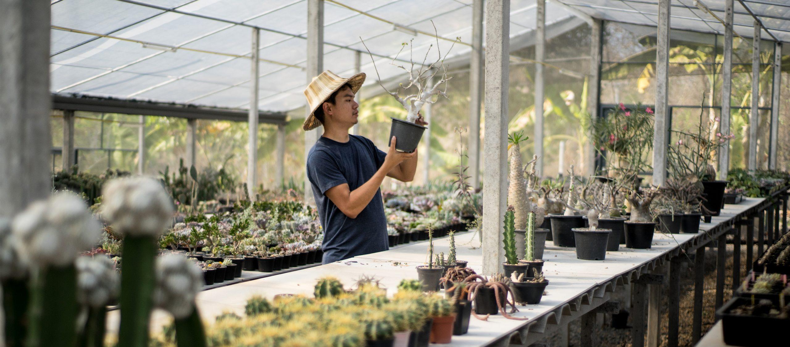 2Bees Garden : สวนเพาะเลี้ยงพืชอวบน้ำของพระเอกภาพยนตร์มหา'ลัยเหมืองแร่