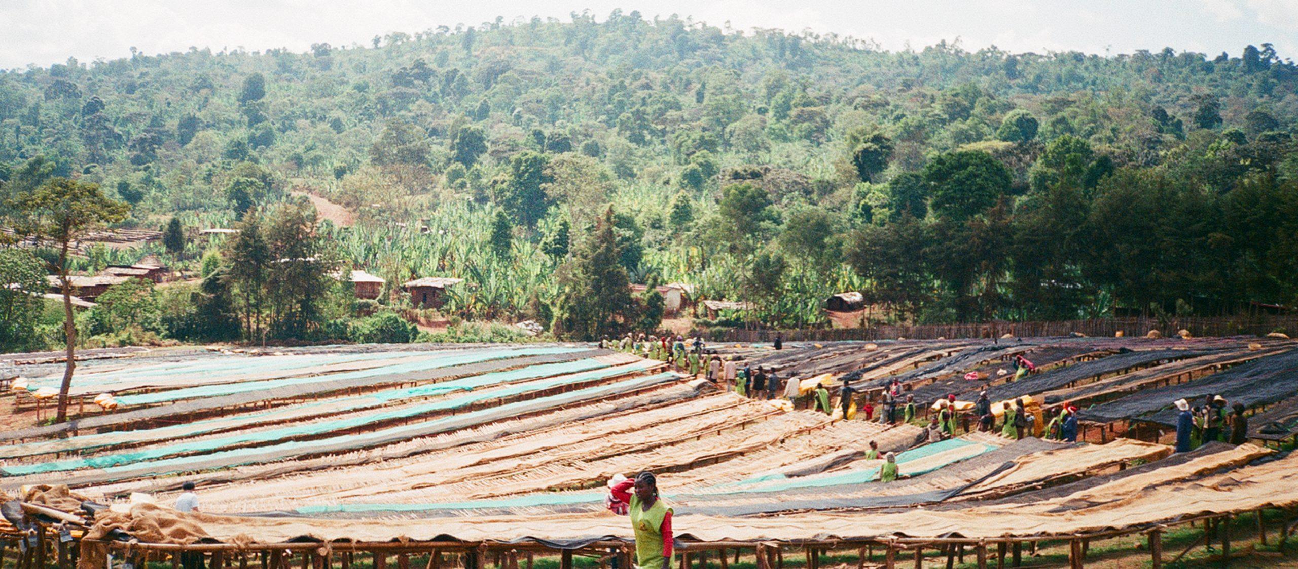 ลัดเลาะแหล่งกำเนิดผลไม้ปีศาจ 'เอธิโอเปีย' เมืองสวรรค์ของคอกาแฟ