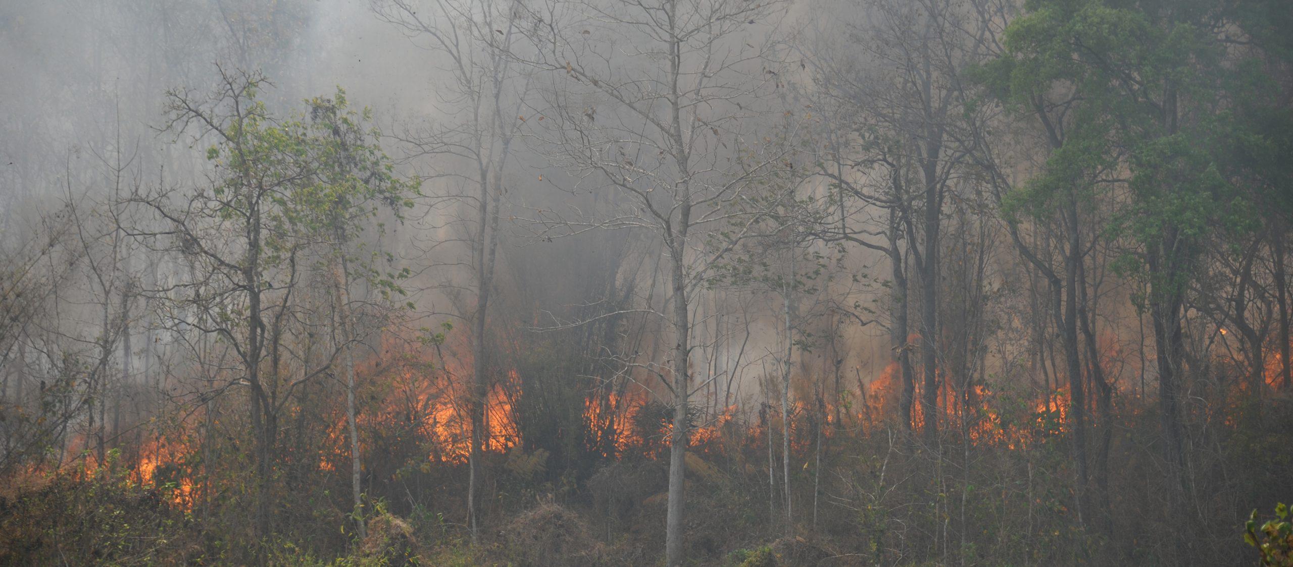 คุยกับ นิคม พุทธา เรี่ยวแรงหลักของผู้ผจญเพลิงในวันที่เชียงดาวกลายเป็นภูเขาไฟ