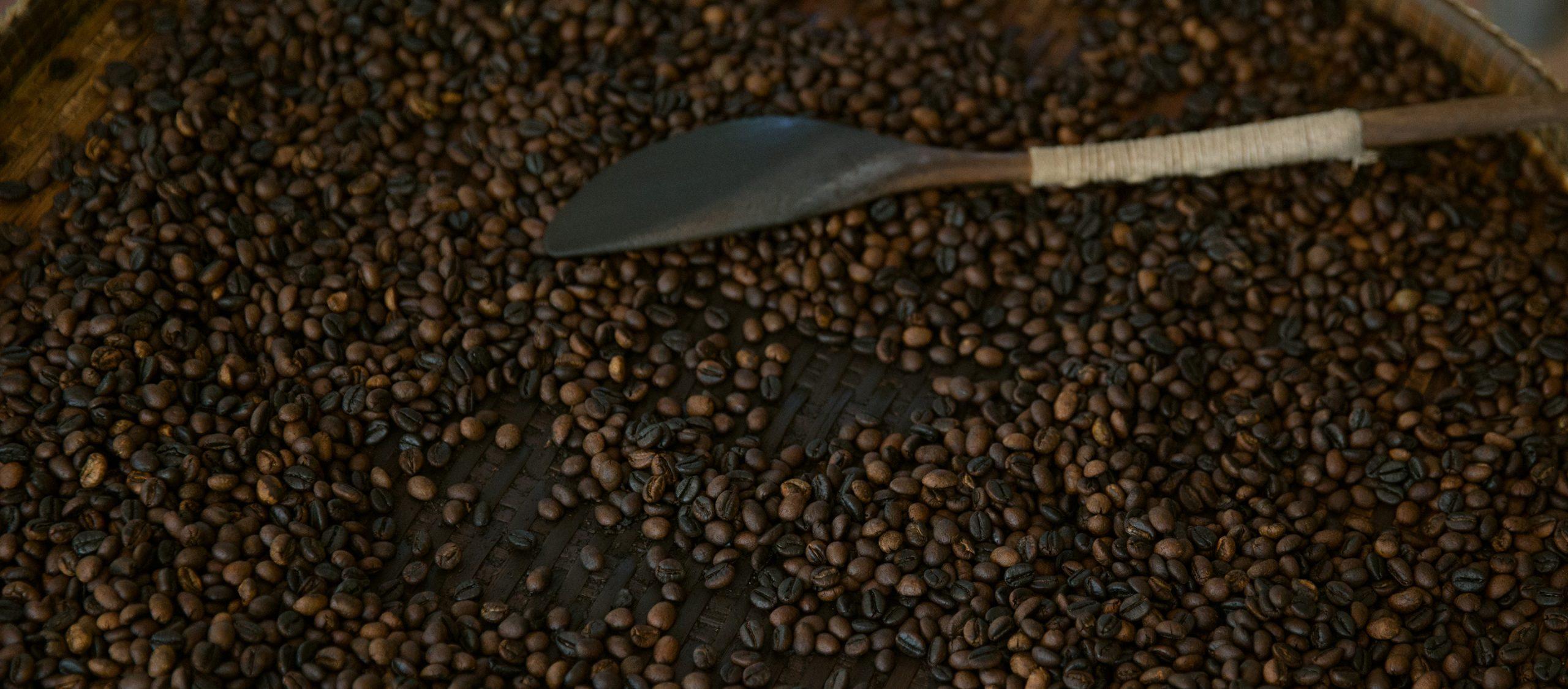 ไฟน์โรบัสต้า : กาแฟสายรองจากแดนใต้ ที่กำลังหายใจรดต้นคอกาแฟพิเศษไทย