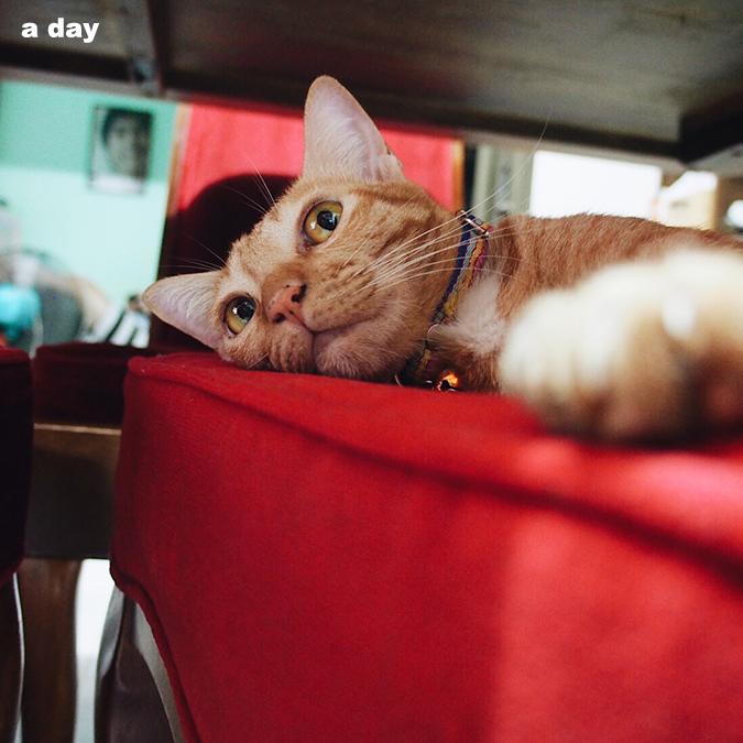 คนอวดแมว ทาสแมว แมว