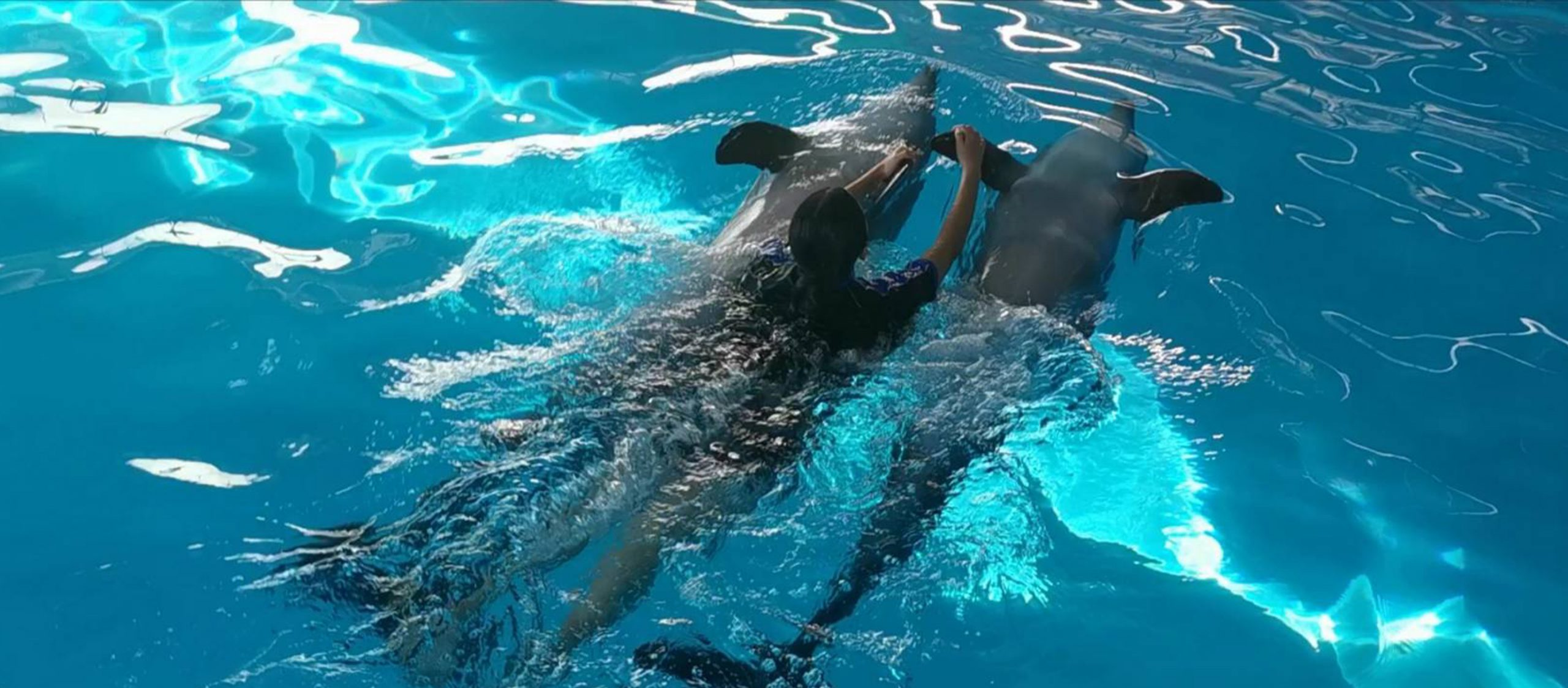 Dolphins and My Little Dream: ไปเล่นกับโลมาสิ ความฝันของเธอไม่ใช่เหรอ