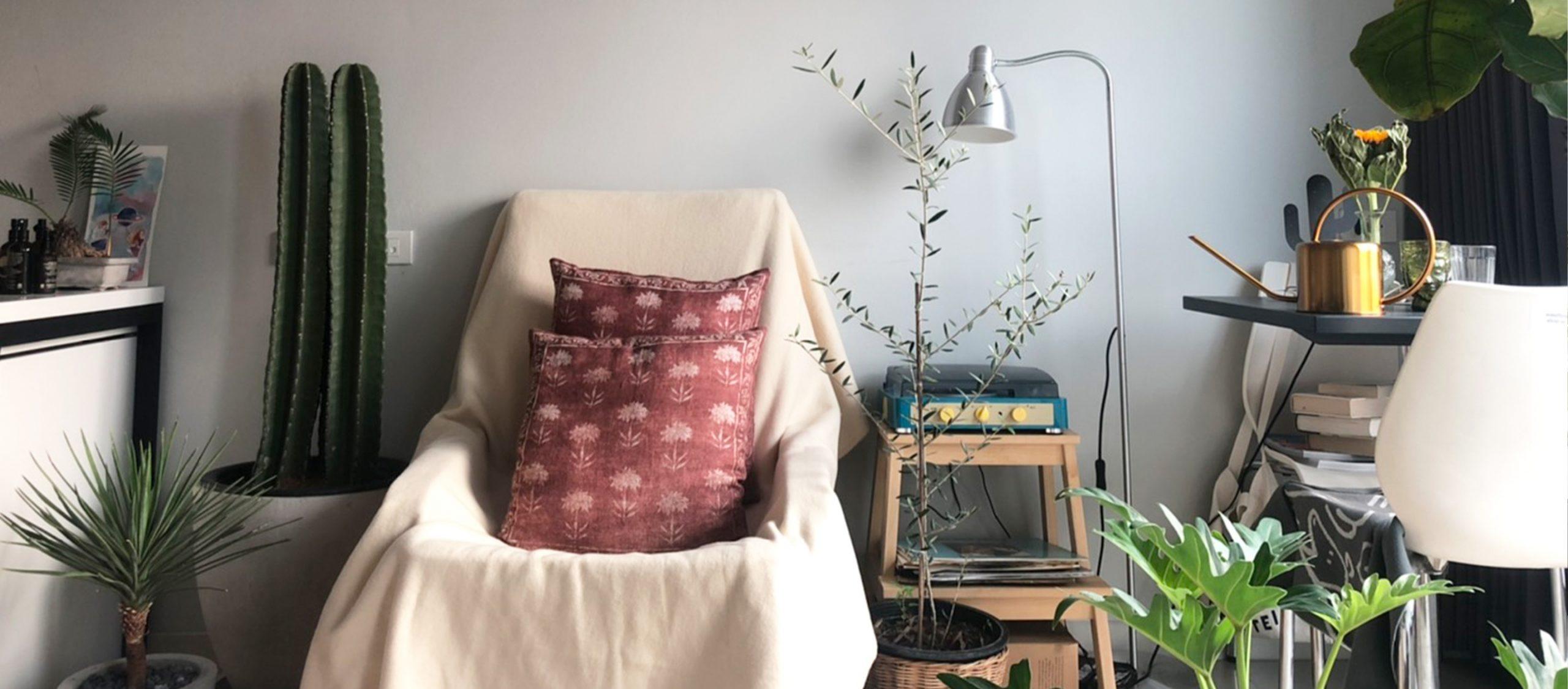 พืชที่อยู่ในบ้าน : ว่าด้วยประวัติศาสตร์ฉบับย่อของการปลูกต้นไม้ในบ้านของมนุษย์