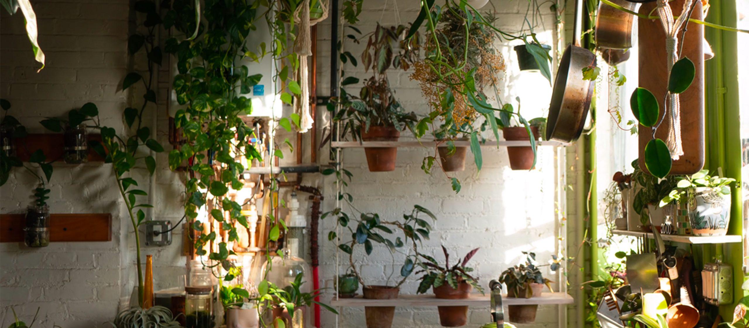 เปลี่ยนห้องเป็นป่า 6 ช่องยูทูบสำหรับคนอยากปลูกต้นไม้ในบ้าน ชุบชีวิตให้ทุกฝ่ายเบิกบาน