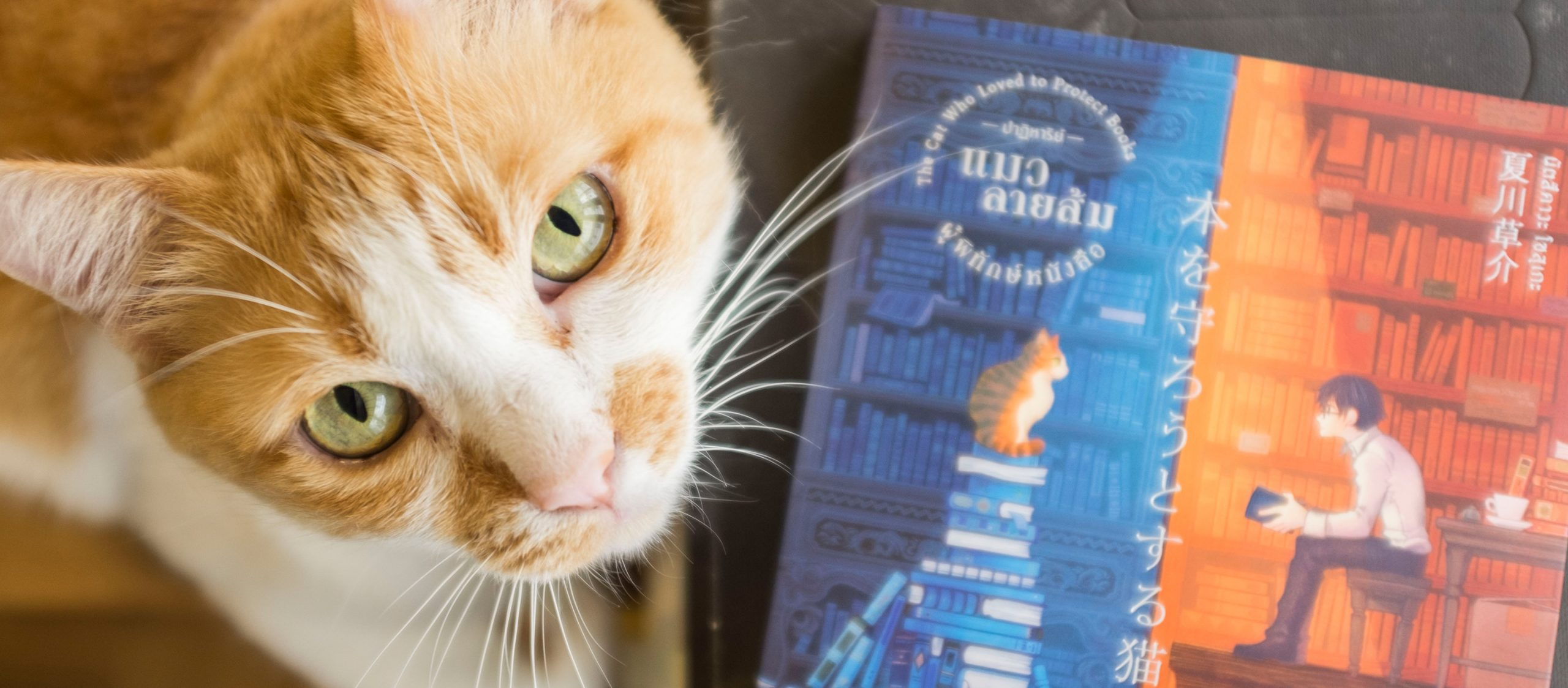 """""""อ่านหนังสือไปทำไม"""" ใคร่ครวญตัวเองไปกับเด็กหนุ่มและเจ้าแมวใน ปาฏิหาริย์แมวลายส้มผู้พิทักษ์หนังสือ"""