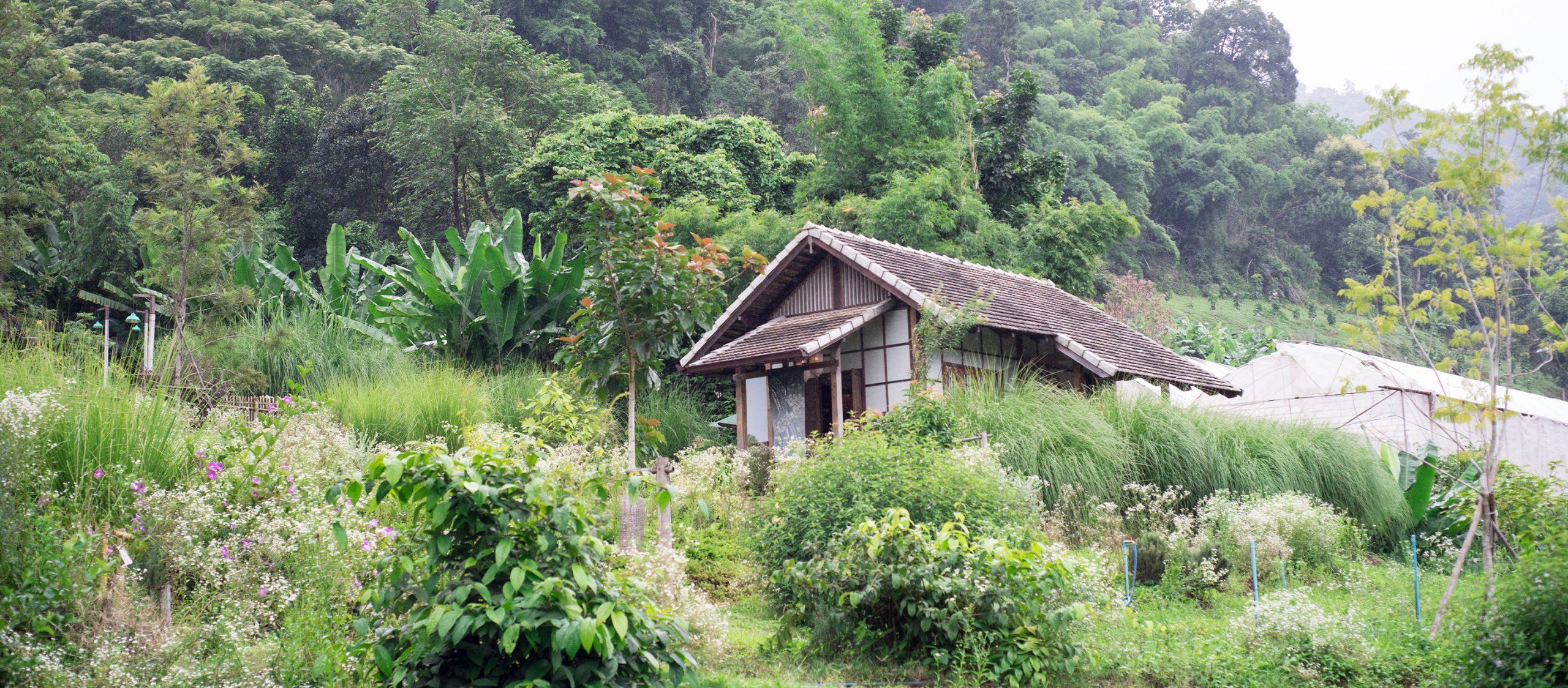 พักใจใน Mori Natural Farm บ้านเล็กในป่าใหญ่สไตล์ญี่ปุ่น แต่สร้างจากไม้ล้านนาแต๊ๆ เจ้า