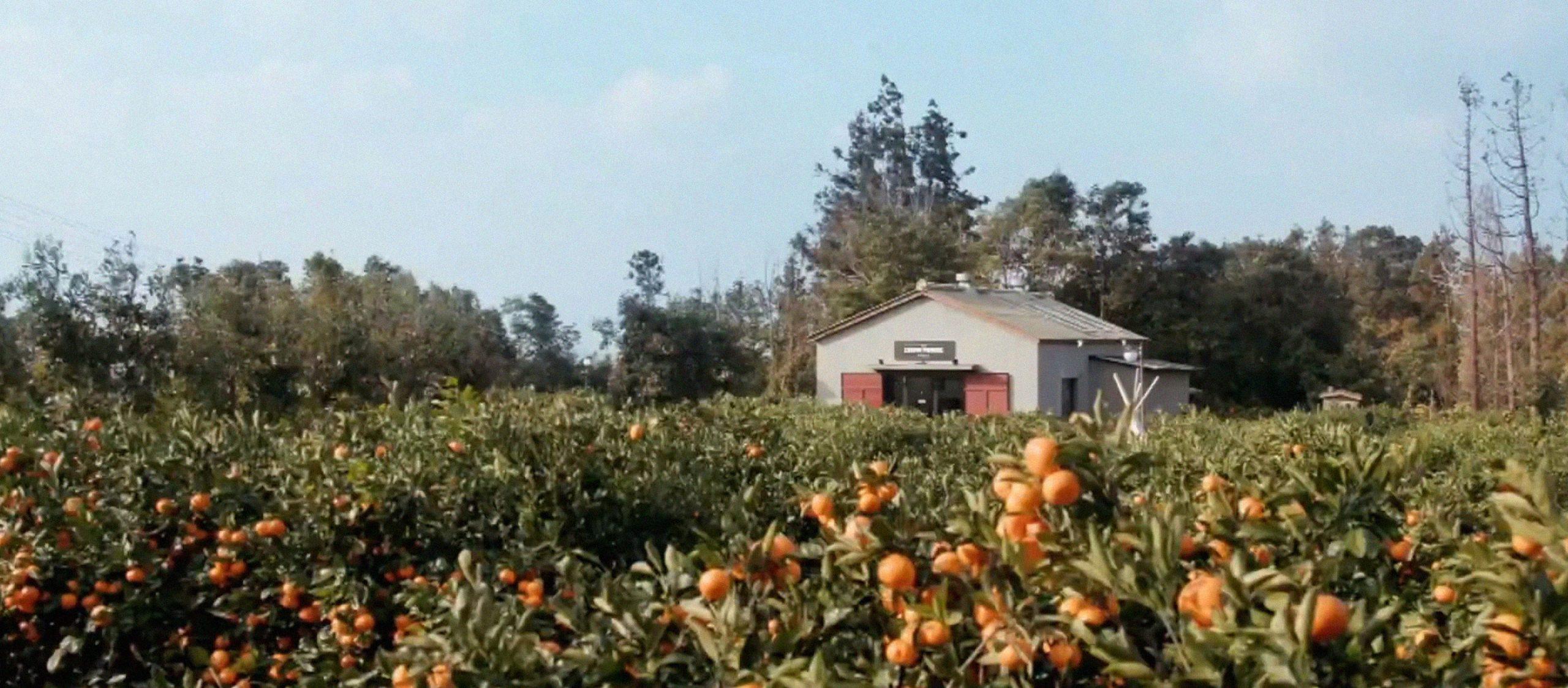 'นอนบ้านโบราณ กินบรันช์ที่สวนส้ม' บินไป staycation ที่เกาหลีใต้ผ่านรายการวาไรตี้
